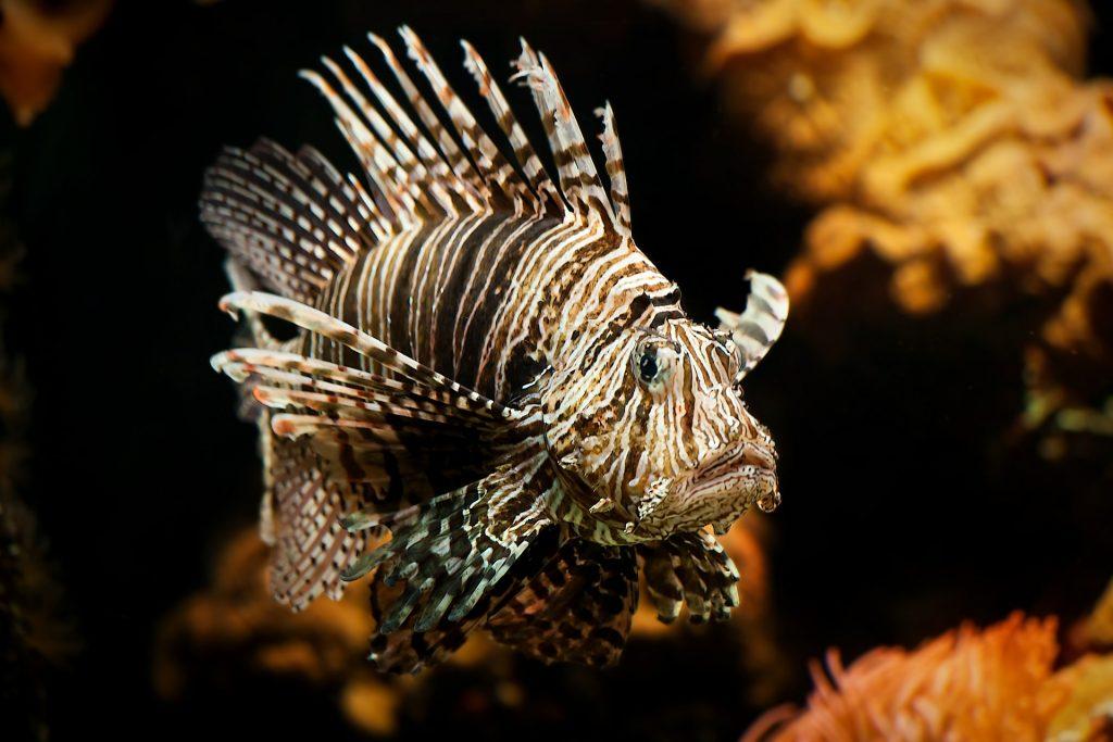 Emerald Coast Open Lionfish Tournament
