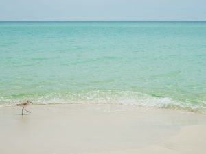 Things to Do in Destin, Henderson State Park