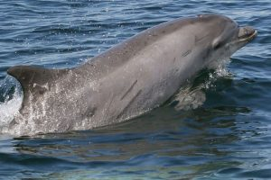 Things to Do in Destin, See the Dolphins